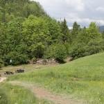U szczytu wąwozu Homole znajduje się Dubantowska Dolinka i charakterystyczne skałki zwane Księgami.