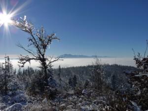 Tatry z podejścia na Wielki Rogacz. Fot. Anna Strama.