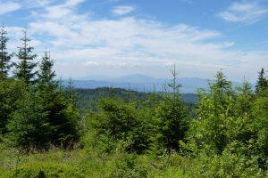 Widok w kierunku Babiej Góry